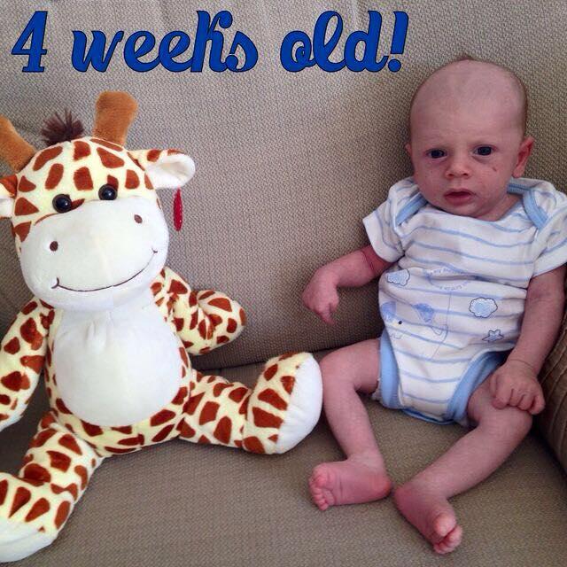 Dexter 4 weeks old